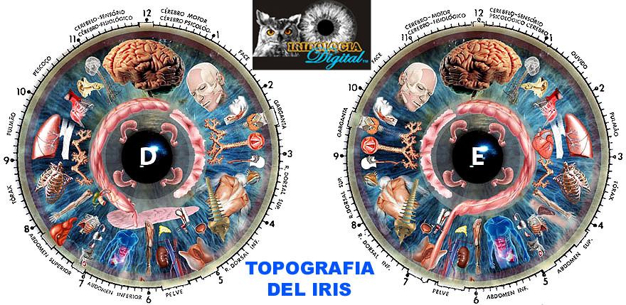 iridologia grafica Jensen cortesia de IridoscopioDigital