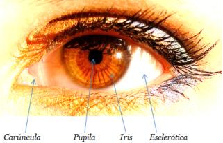 Iridologia Anatomia del Iris Alquiza Salud